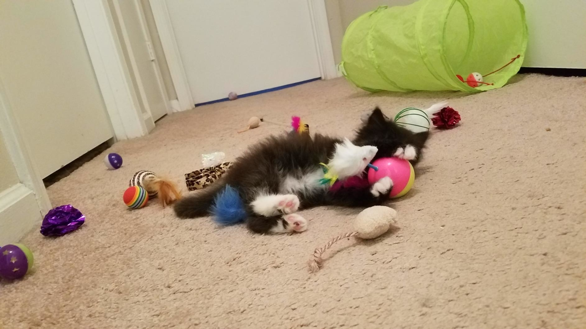 A kitten surrounded by toys