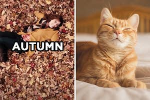 """On the left, Vanessa Bayer lying in a pile of leaves in an """"SNL"""" sketch labeled """"autumn,"""" and on the right, a sleepy kitty on a bed"""