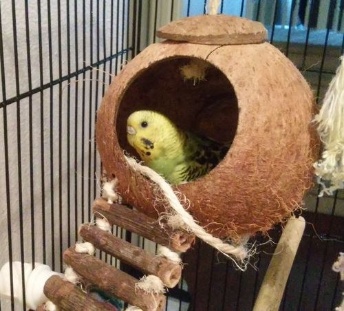 A bird in the coconut