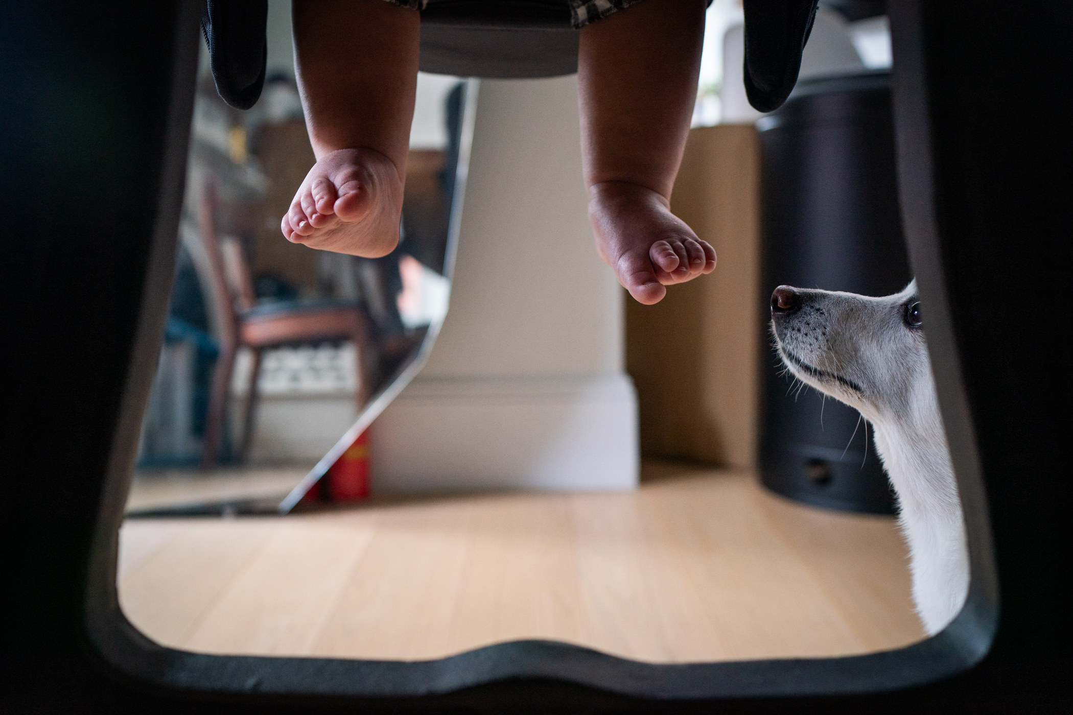 A small dog looks at a baby's dangling feet under a table