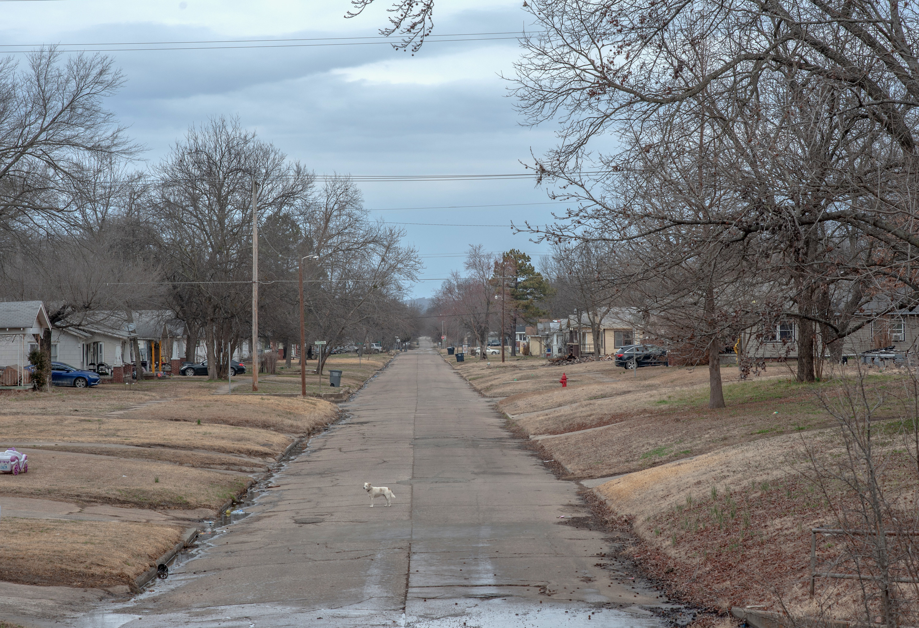 A small white dog stands in the middle of an empty neighborhood street, lined with single-family homes and bare trees