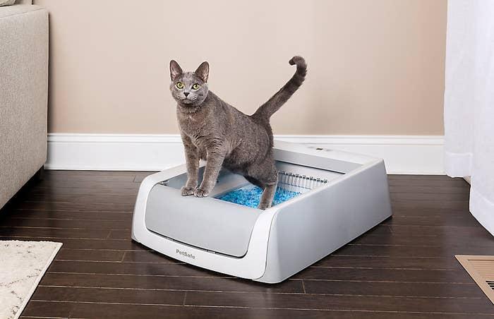 cat in a self-cleaning litter box