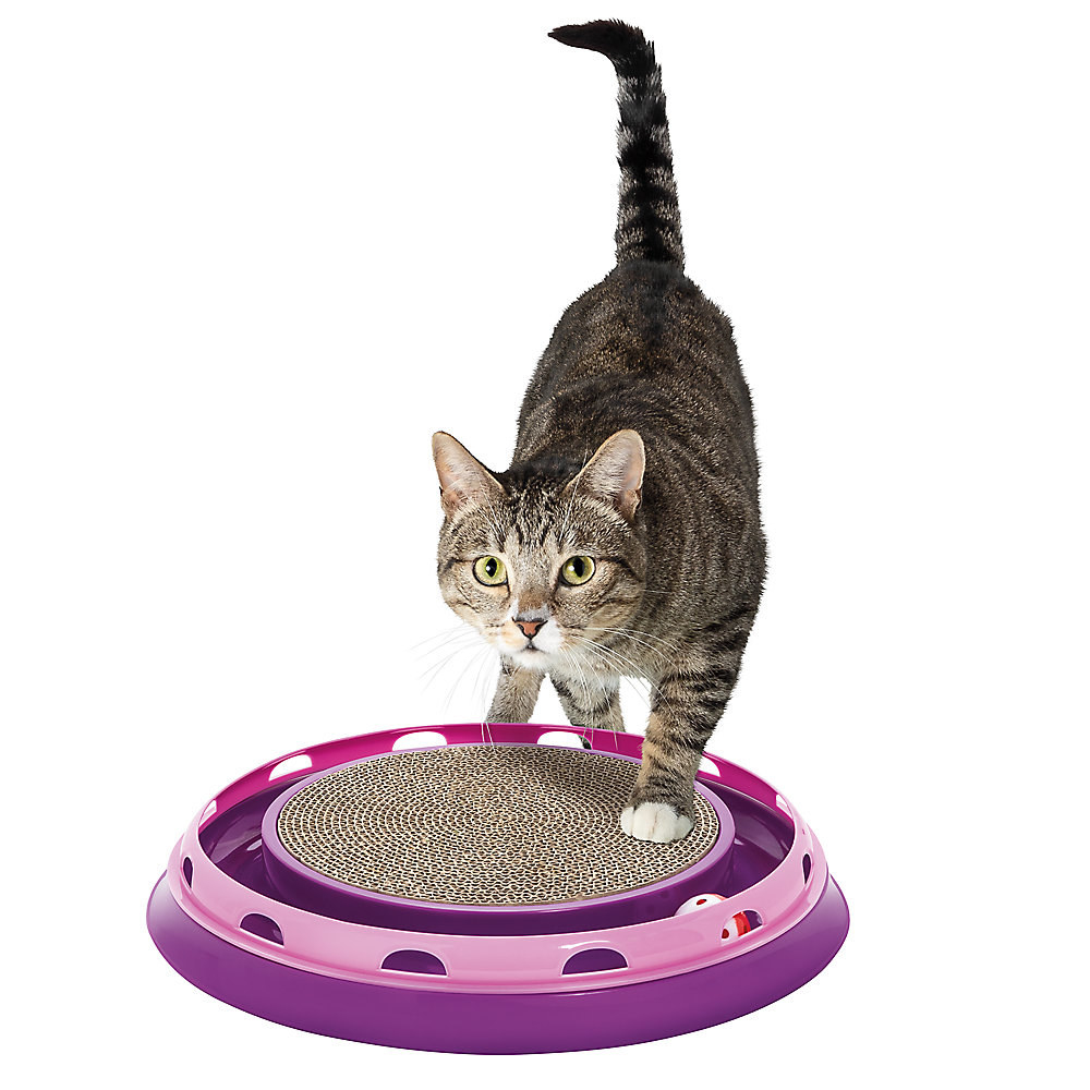 cat playing with a scratcher toy with a ball track around it