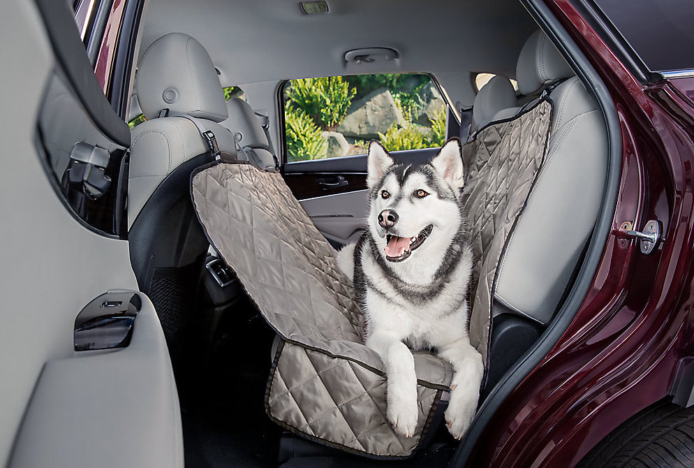 husky in the backseat that is covered with a protector