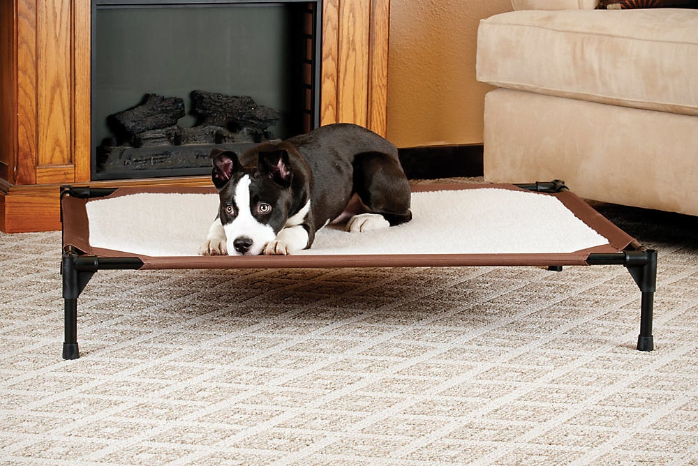 raised pet bed with a black and white dog on top of it
