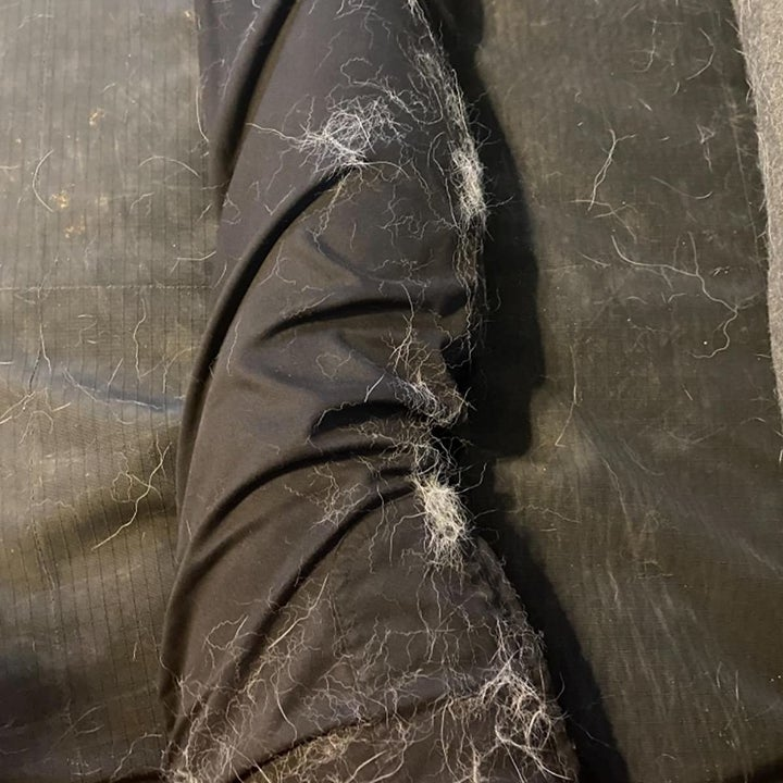 A leg before being brushed