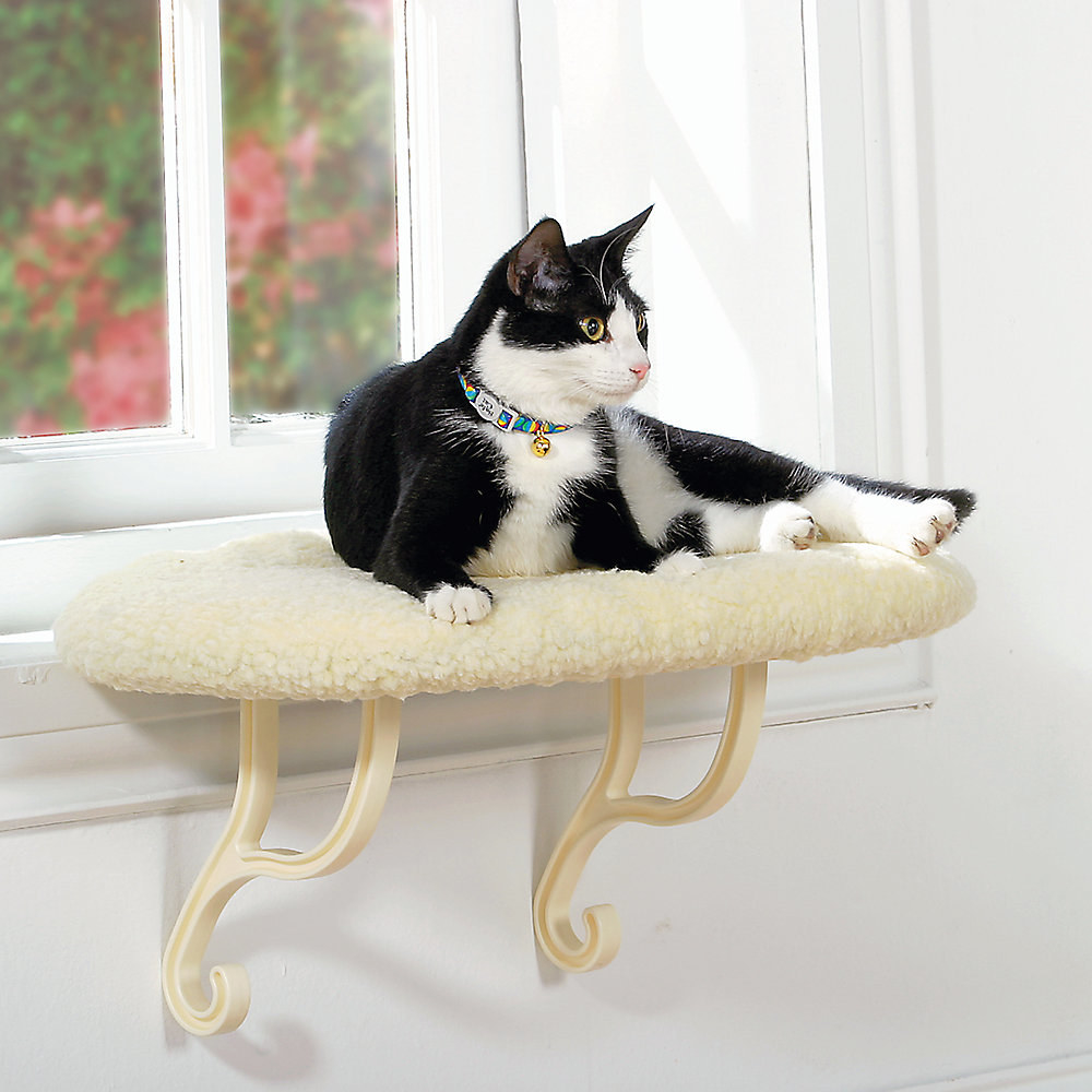 cat sitting on a window sill cat bed