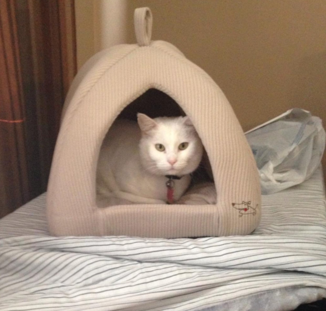 The tent pet bed