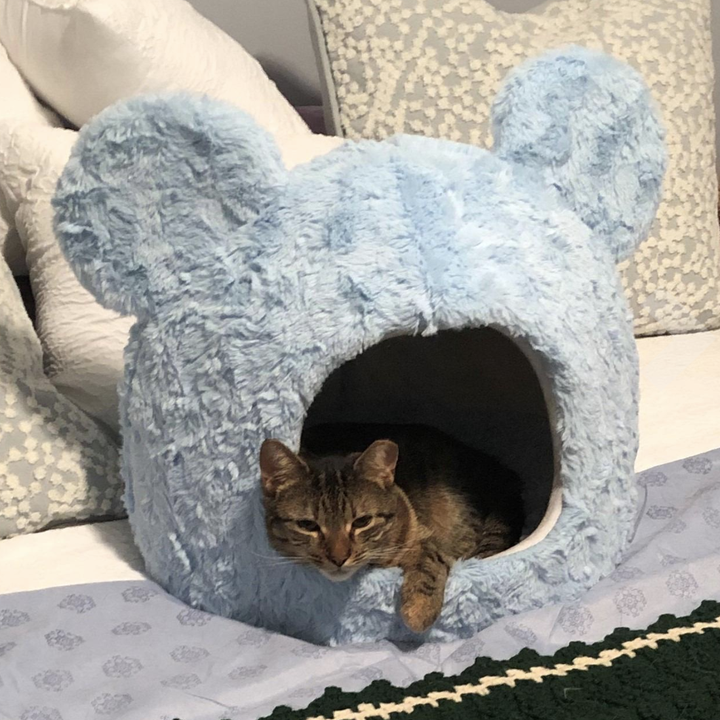 Cat in blue Mickey Mouse shaped cat house
