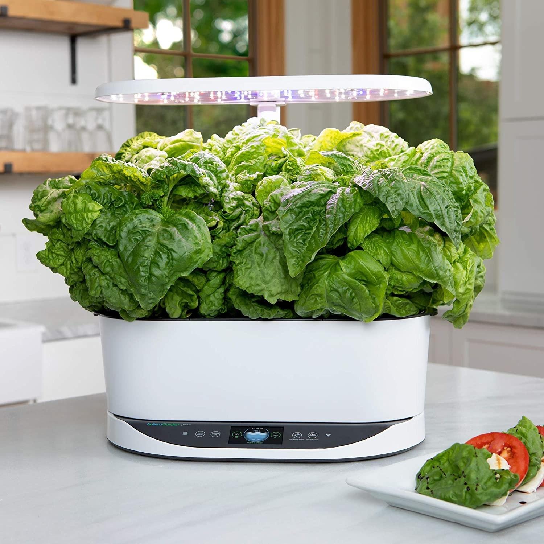 the white Aerogarden growing an array of herbs on a countertop