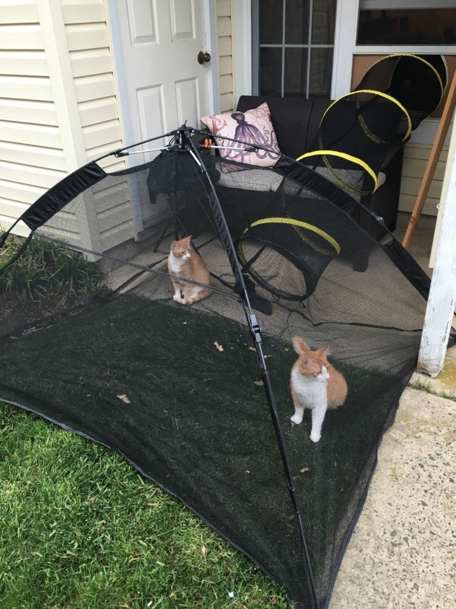 The outdoor cat enclosure with two cats inside, with a tunnel leading back in through a window