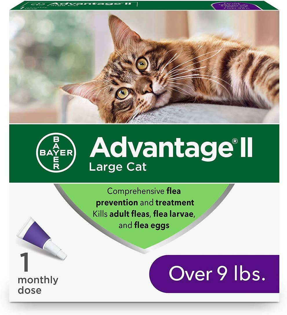 Amazon Products For Indoor Cats