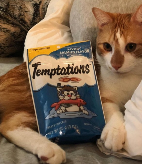Reviewer's cat lays out with a bag of Temptations treats on his stomach