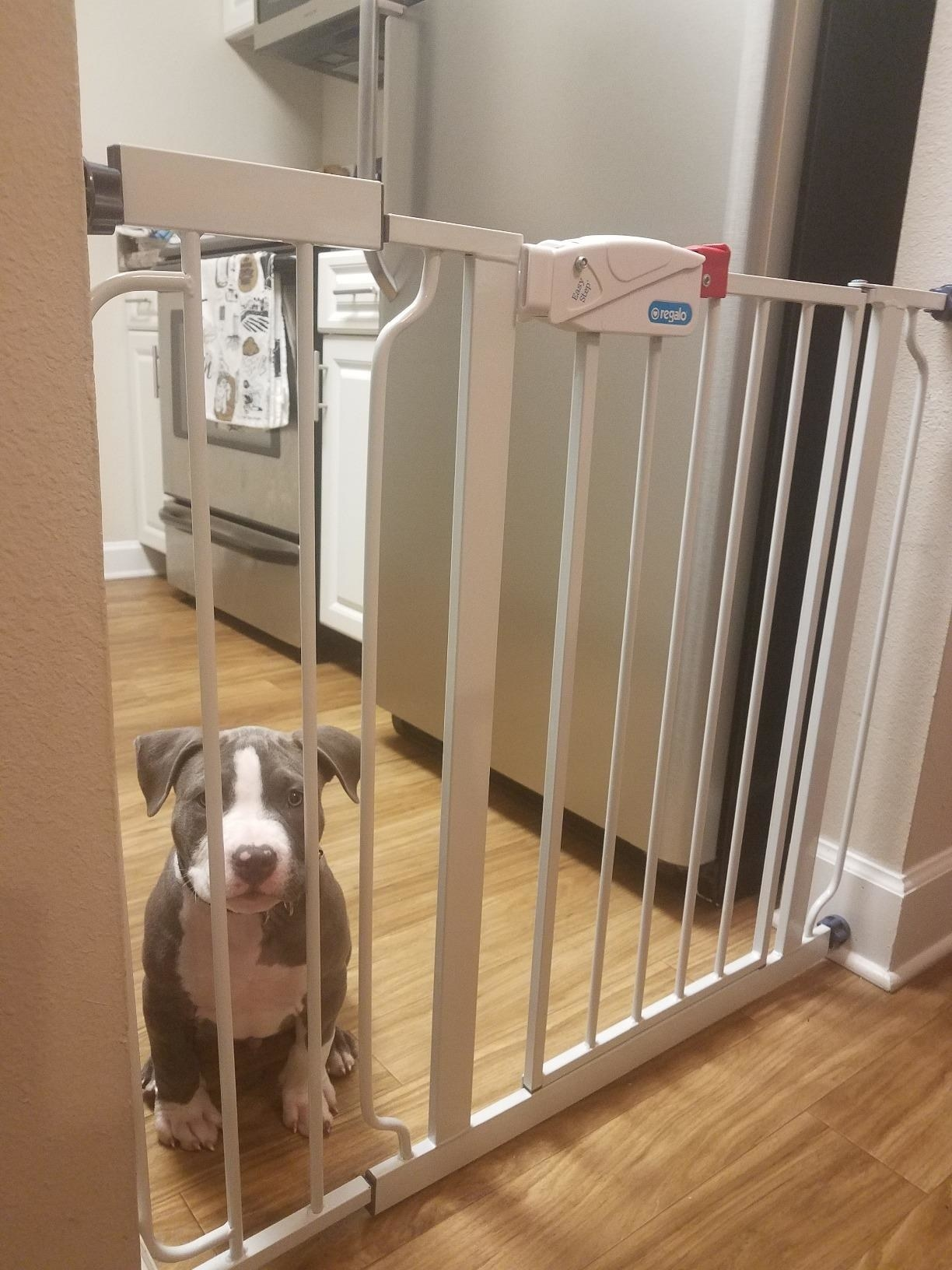 A puppy behind the baby gate