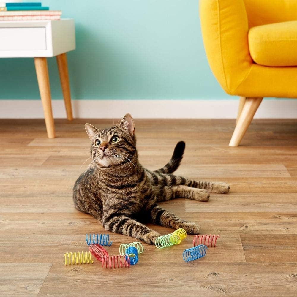 Cat on floor with springs