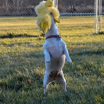 reviewer photo showing their dog catching one of the yellow ducks in their mouth