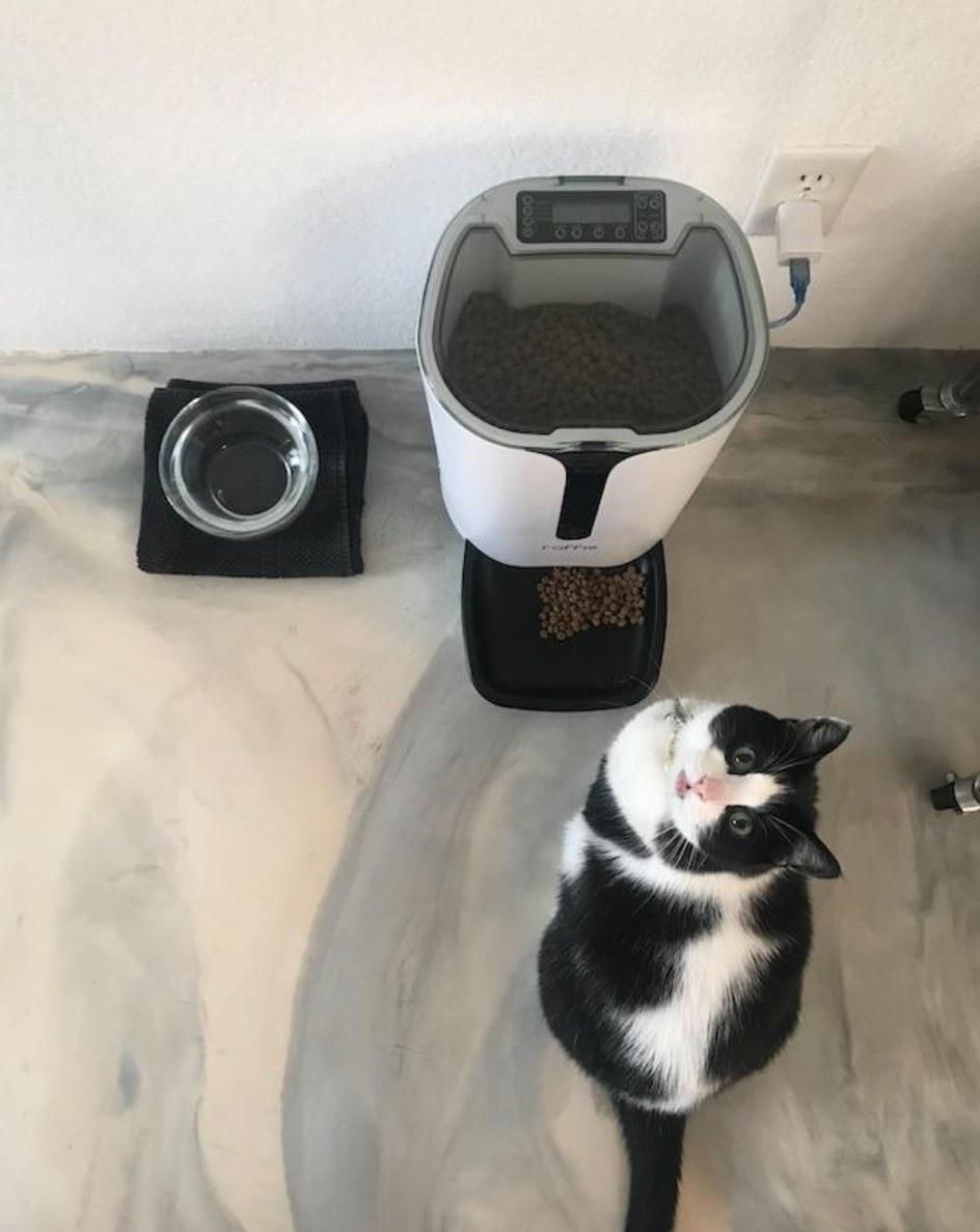 tuxie in front of white auto feeder