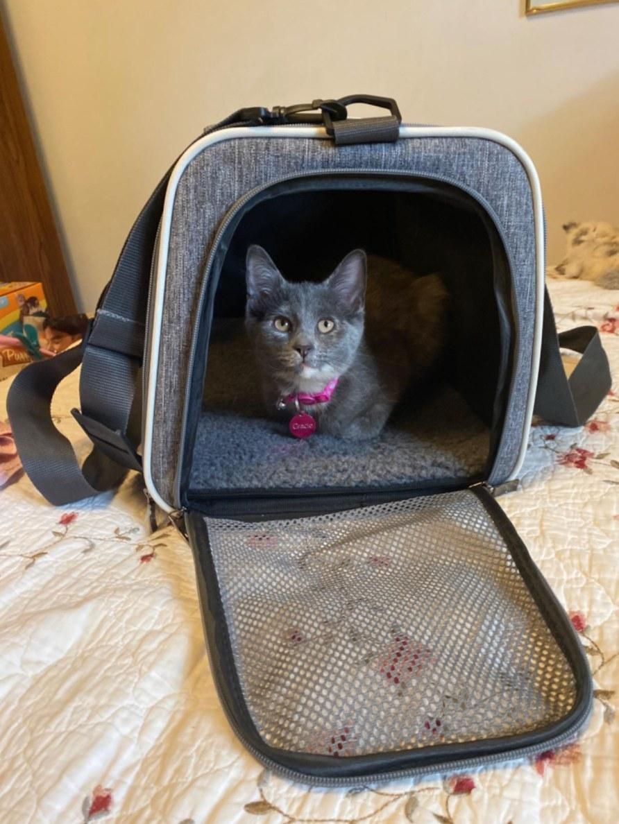 kitten in the carrier
