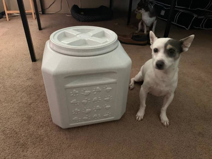 The white storage container next to a small dog