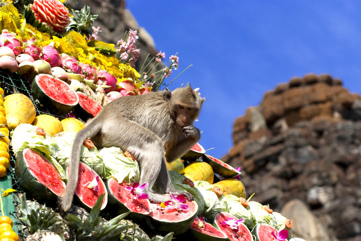 monkey feeding itself on a pyramid made of fruit