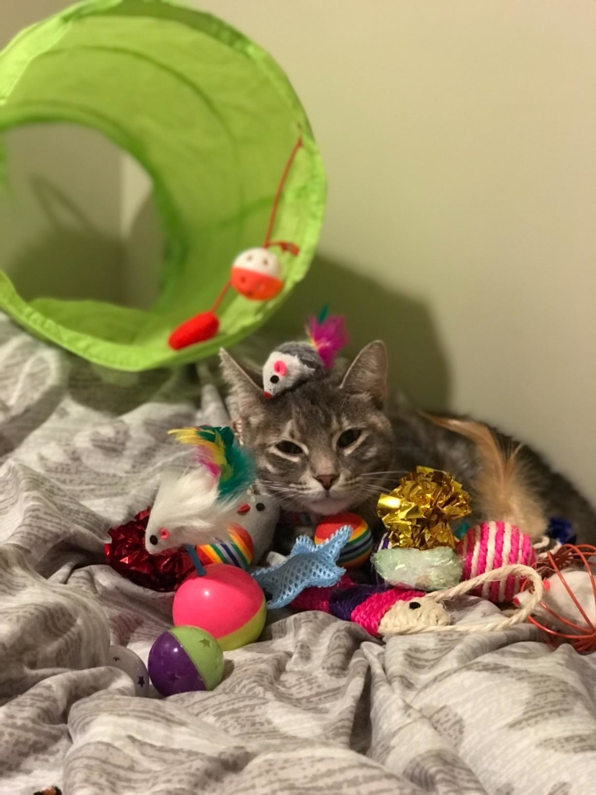 Reviewer's cat in bed with toys