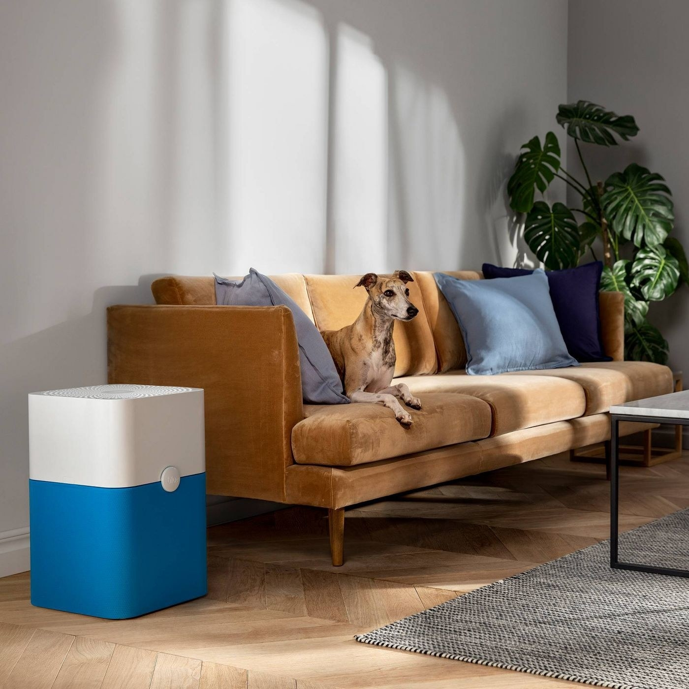 blue and white air purifier sitting in a room next to a couch with a dog on it