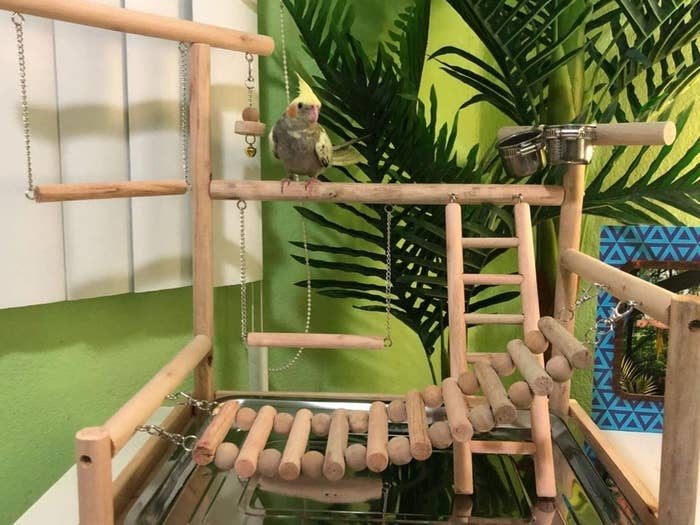 Reviewer's bird sitting on the wooden play gym