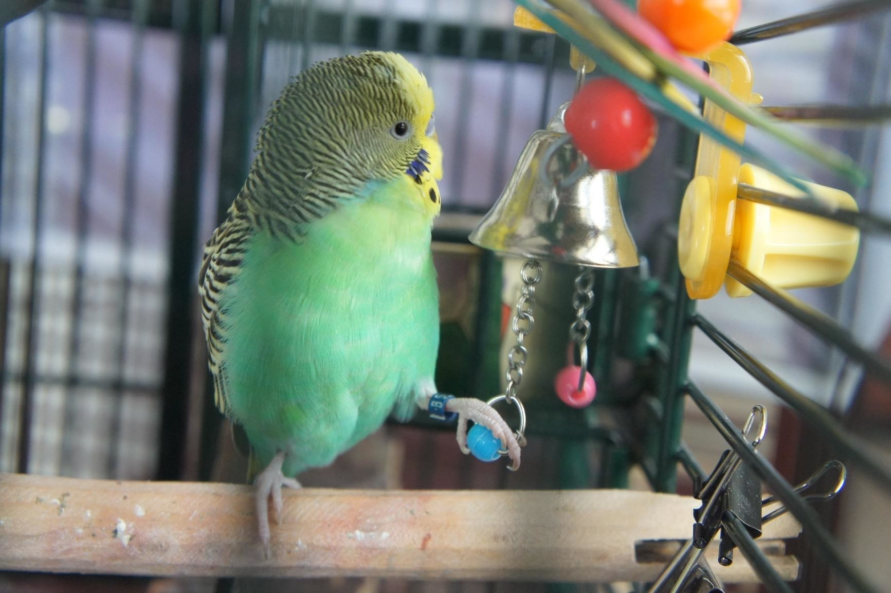 Reviewer's bird in cage