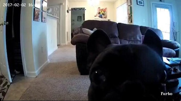Reviewer's footage of their dog sniffing the camera