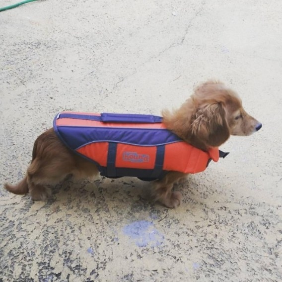 This lifejacket keeps pups  safe and afloat in water