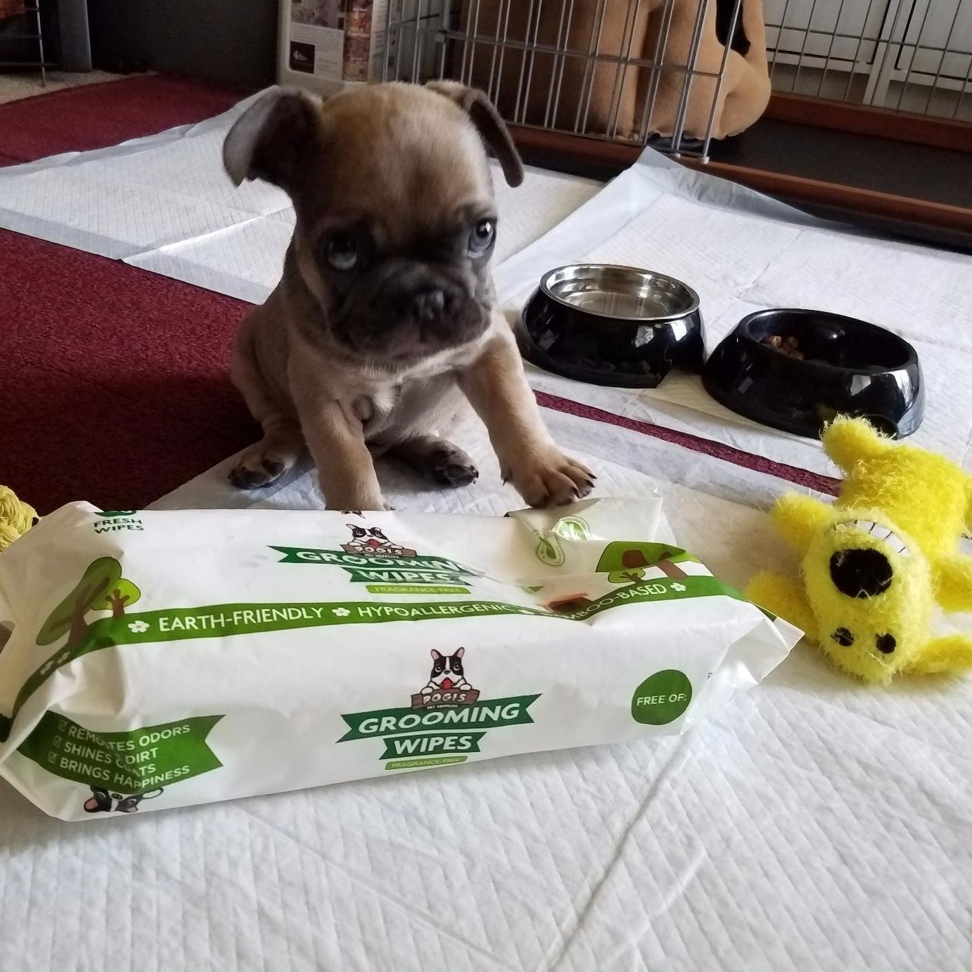 A tiny puppy next to the pack of wipes