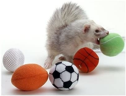 ferret with small tennis, basketball, soccer, football, and golf balls