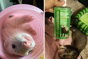ferret in a pink tunnel and a sleepy ferret next to a reviewer holding ferret shampoo