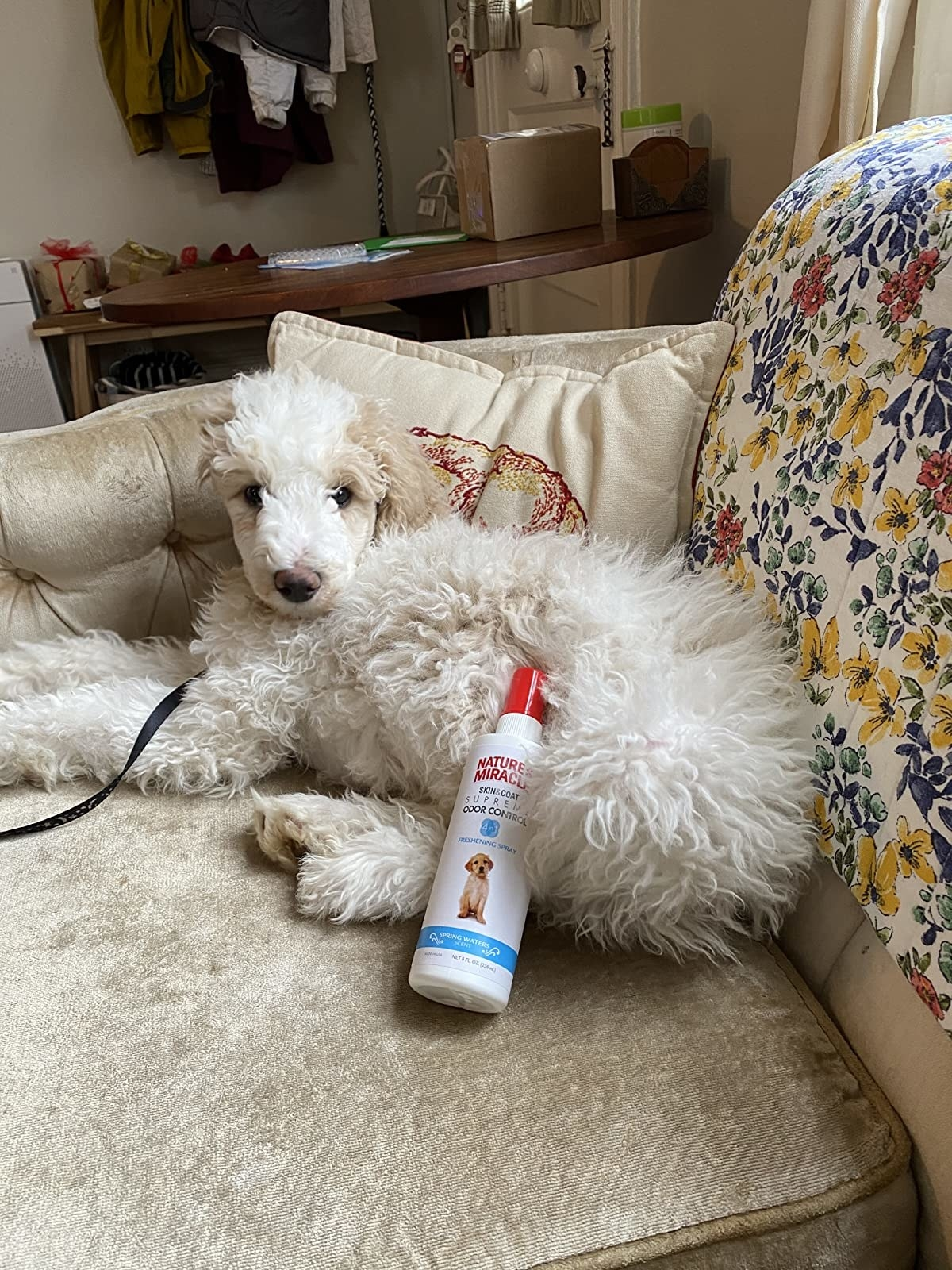 A fluffy puppy with the spray bottle