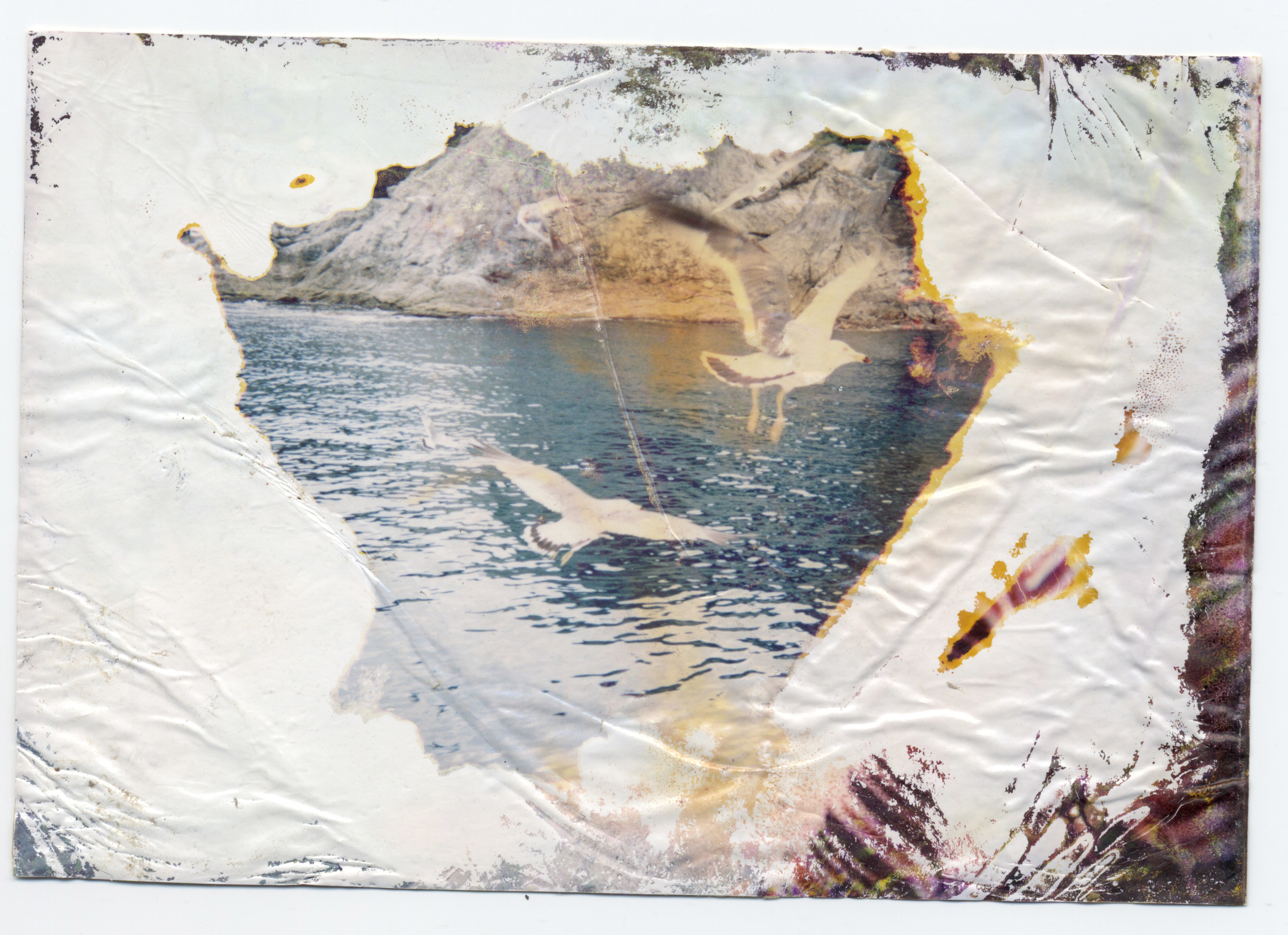 a damaged photograph of two seagulls flying over a body of water