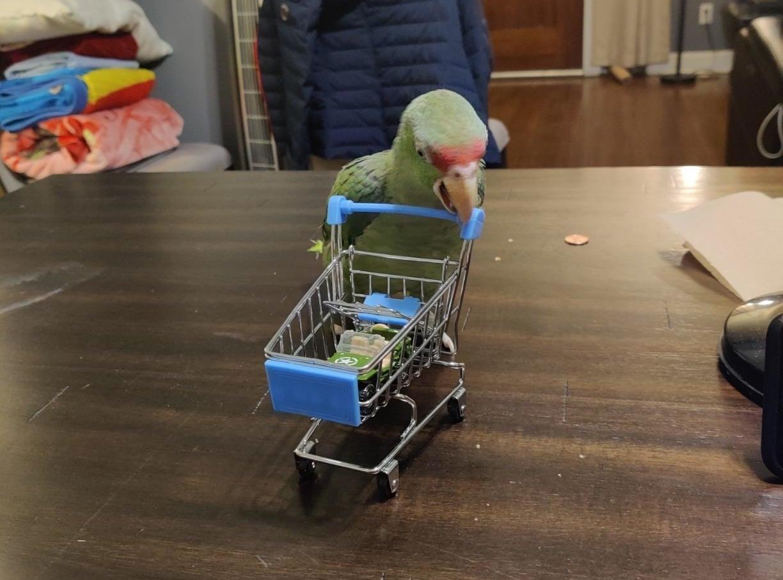 Reviewer's bird and cart