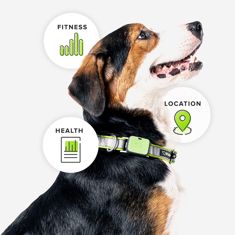 Dog wearing the collar