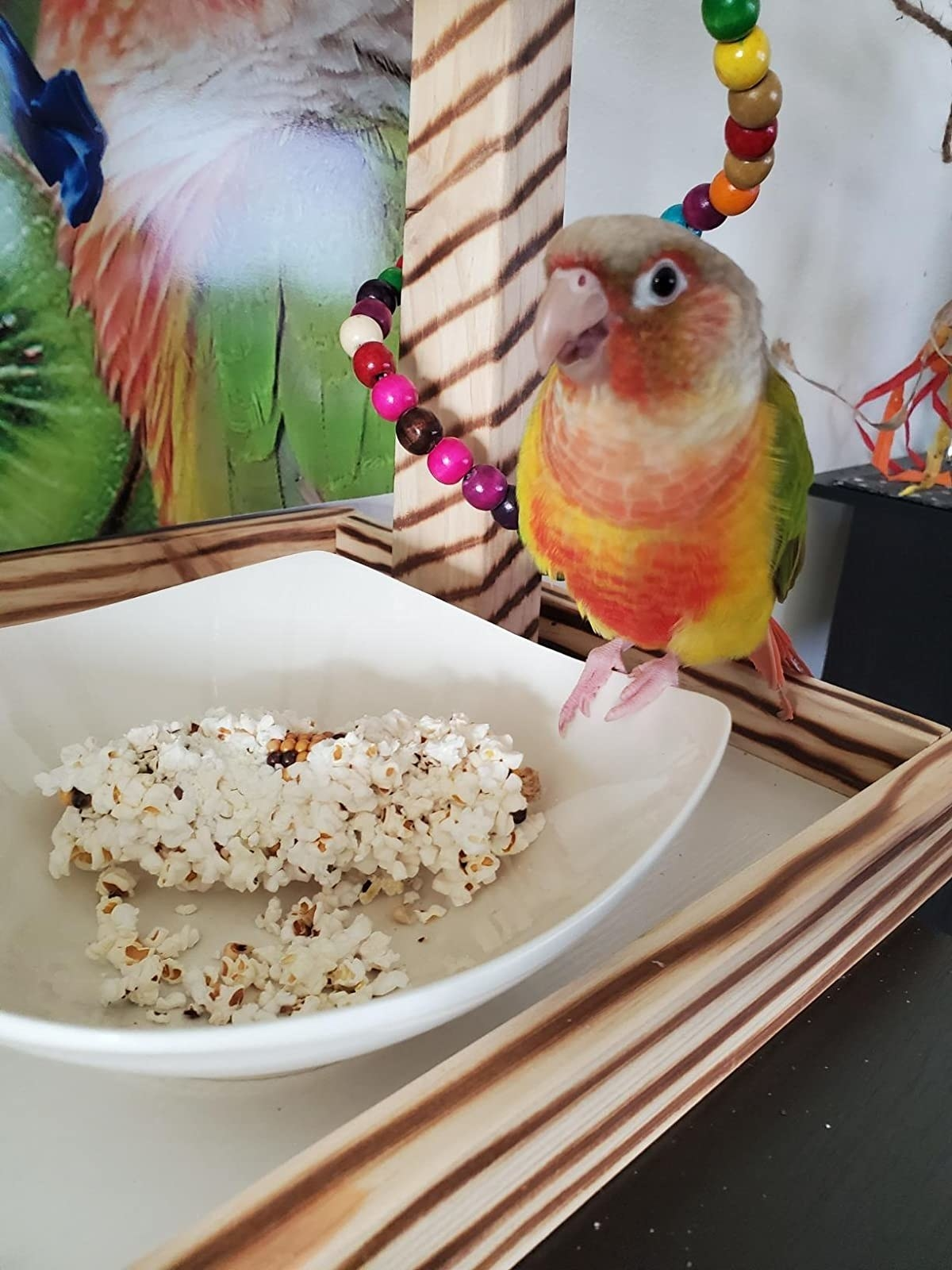 Reviewer's bird with popcorn in bowl