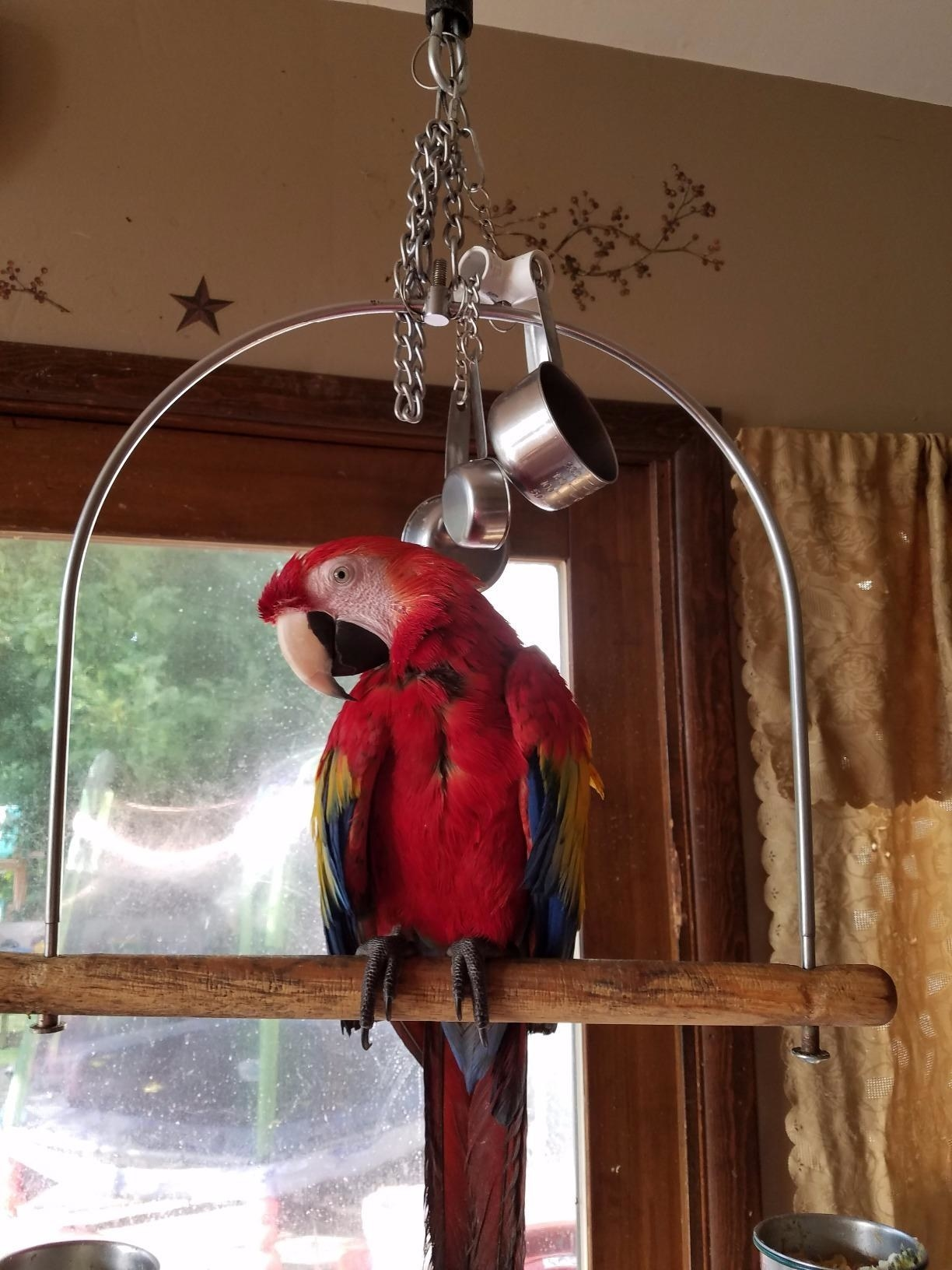 Reviewer's bird on perch with toy