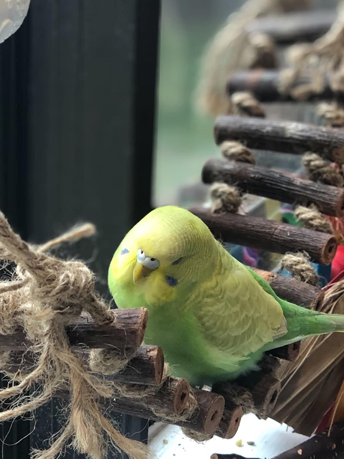 Reviewer's bird on the rope bridge