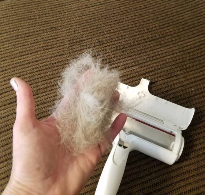 Reviewer holding a large clump of fur next to the roller