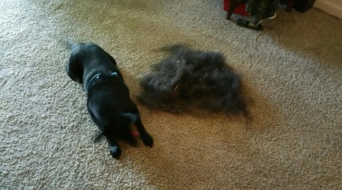 A reviewer's dog sat aside all the hair removed from this carpet broom.