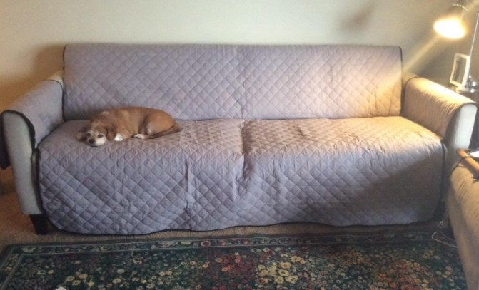 A reviewer's dog sleeping comfortably on a sofa protector