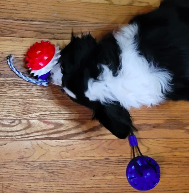 Reviewer's dog chewing on the ball