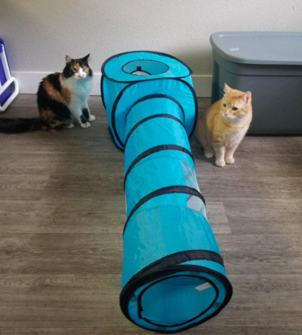Reviewer's two cats sitting with the play tunnel