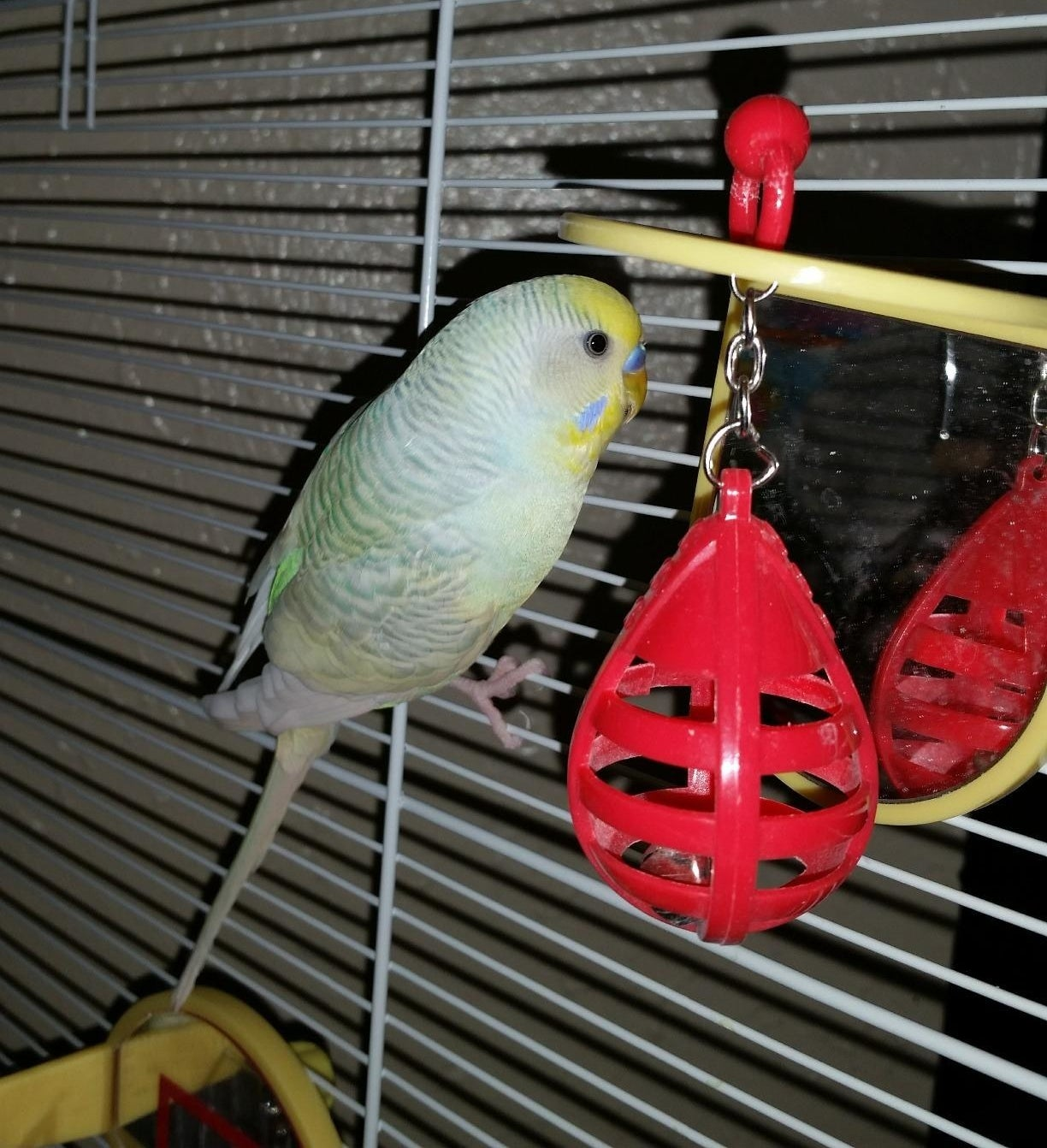 Reviewer's bird in cage playing with the punching bags