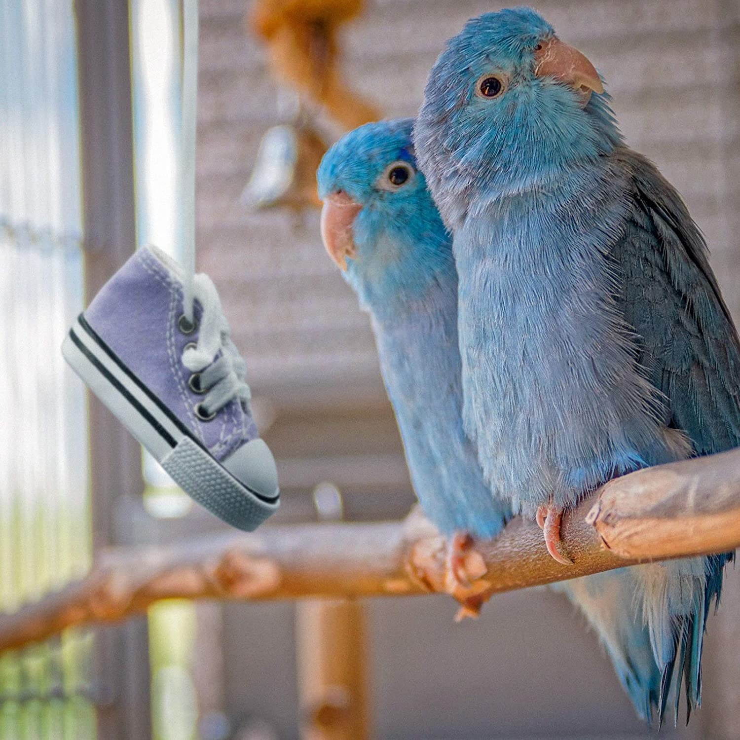 Birds playing with the mini converse sneaker toy