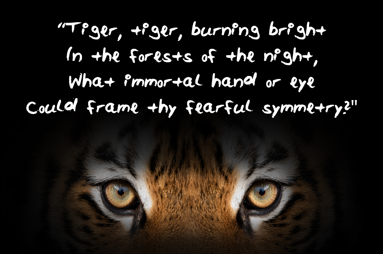 Tiger tiger burning bright In the forests of the night What immortal hand or eye Could frame thy fearful symmetry