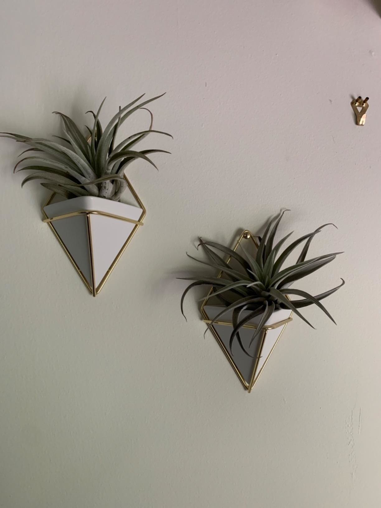 The planters, which have a triangular shape, are made of white ceramic, and hang with gold wire that loops around the planters