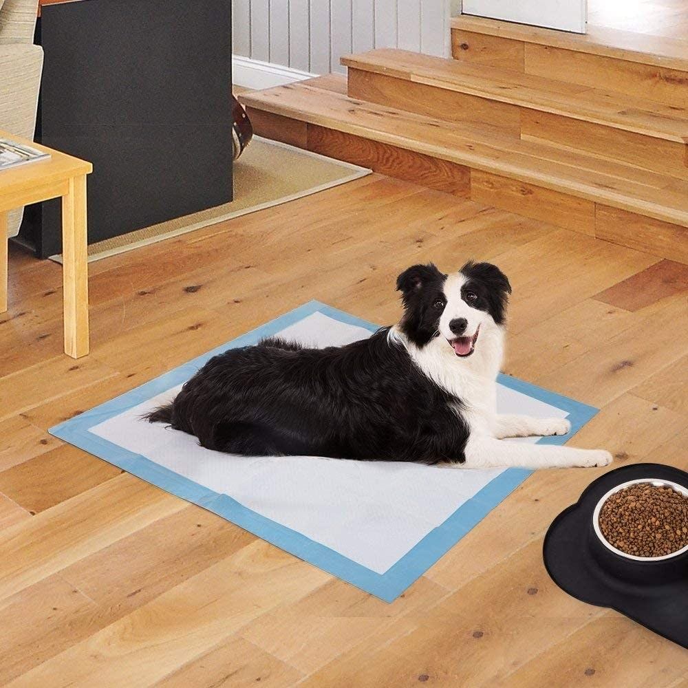 the dog on a pad